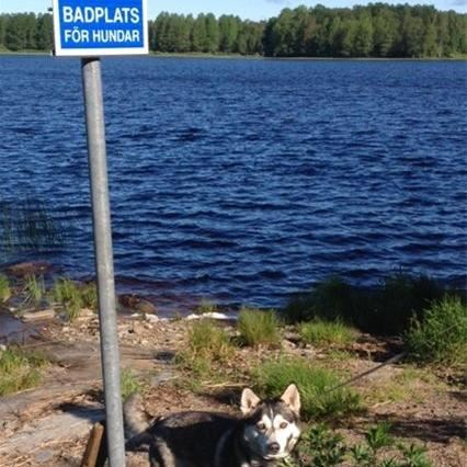 Hundbad i Ockelbo