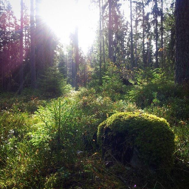 Åshuvudet Hiking Trail