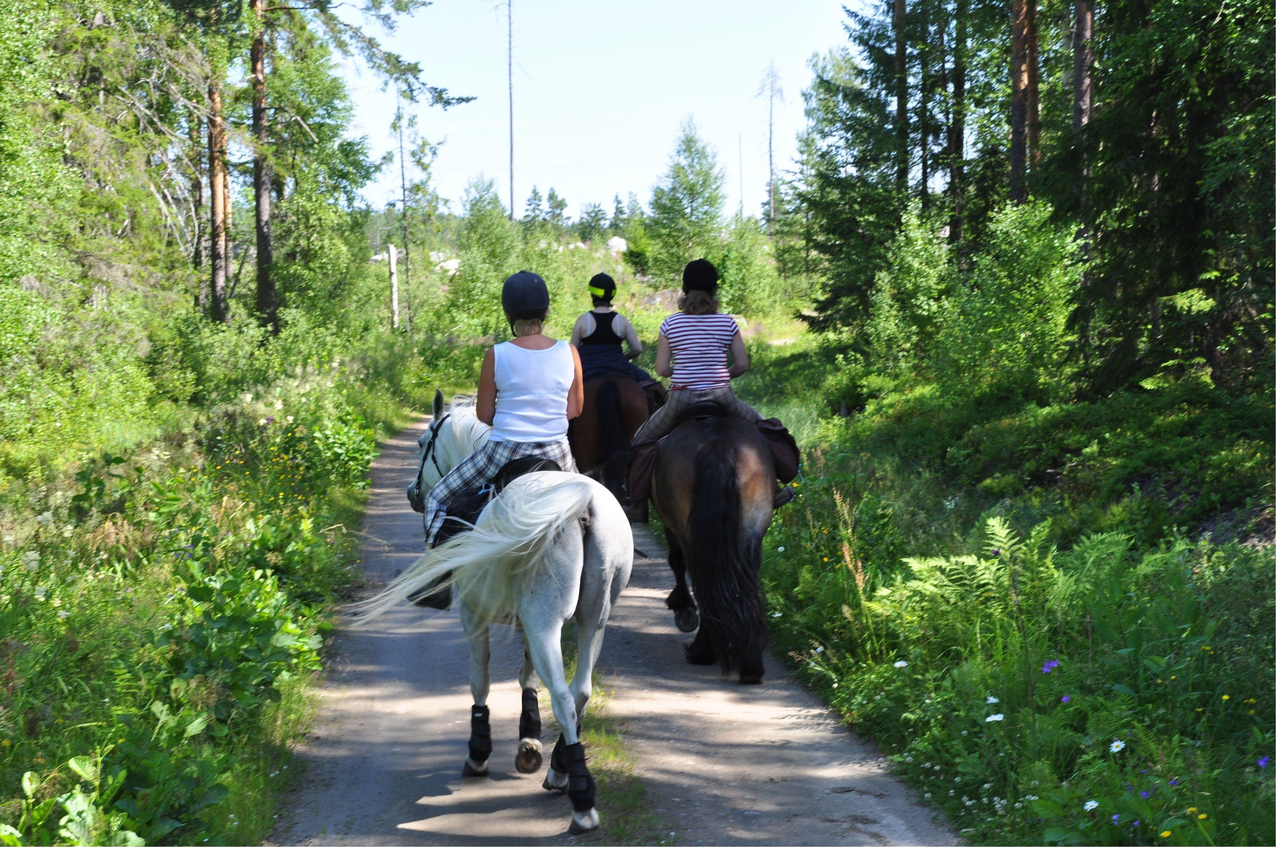 Horse tour - Small tour