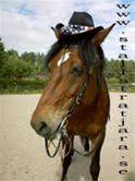 Ridning, Fäbodtur till häst