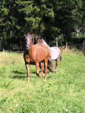 Horse riding with your own horse - a part of Hälsingland