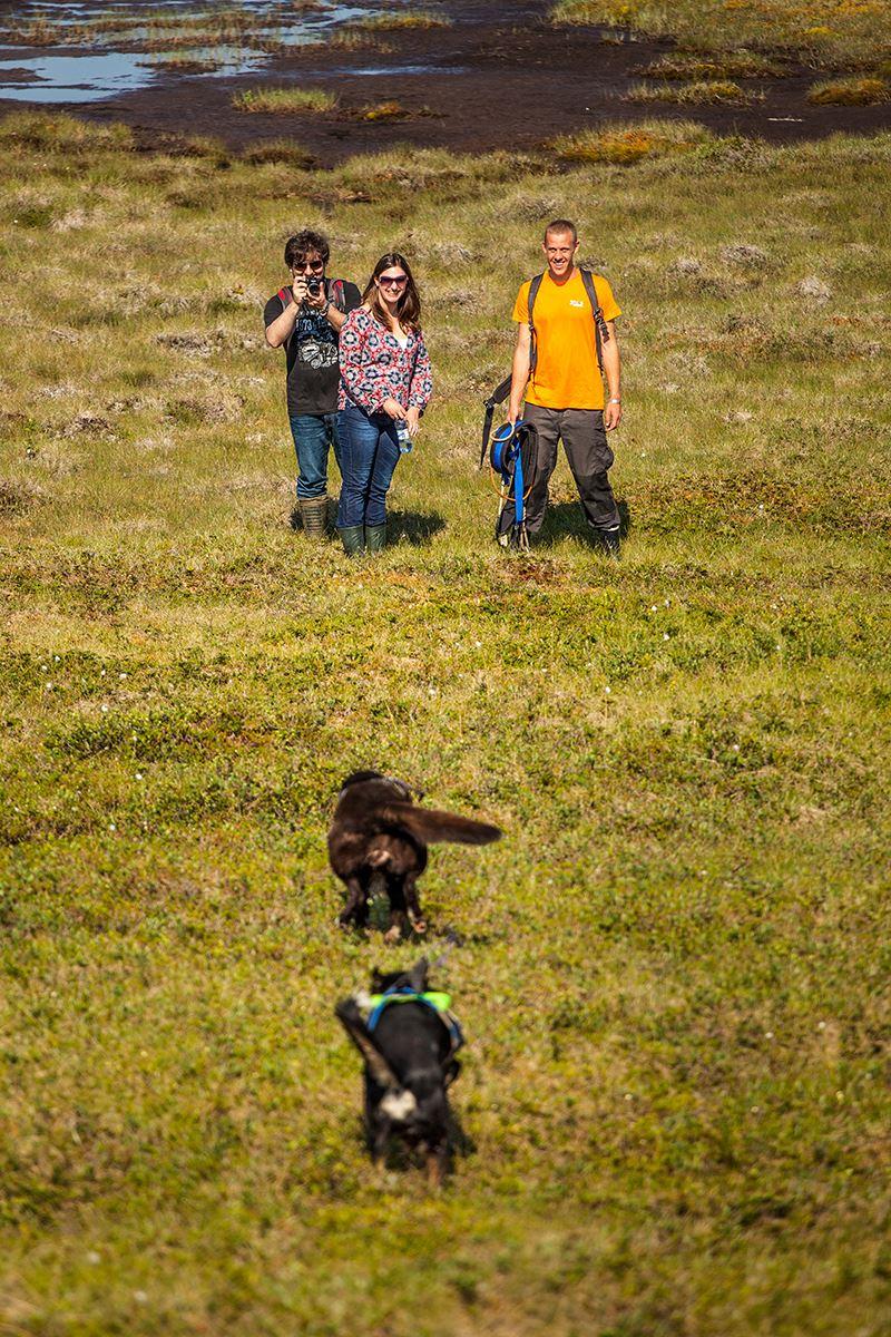 Hiking with the Huskies - Tromsø Villmarkssenter