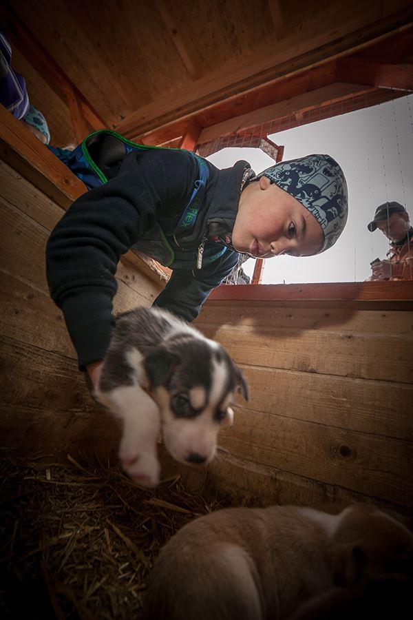 Huskybesøk – Tromsø Villmarkssenter