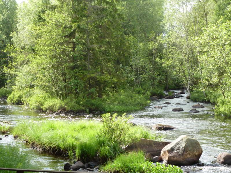 Stream fishing in Alsterån