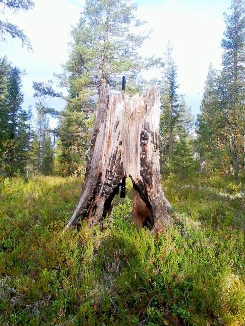 Urskogsvandring i hjärtat av Hälsingland