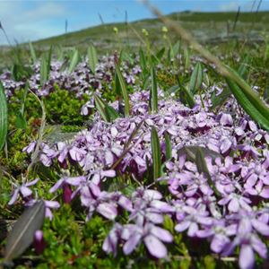 Blomstervandring på Gierevaartoe som i år är en av sommartopparna