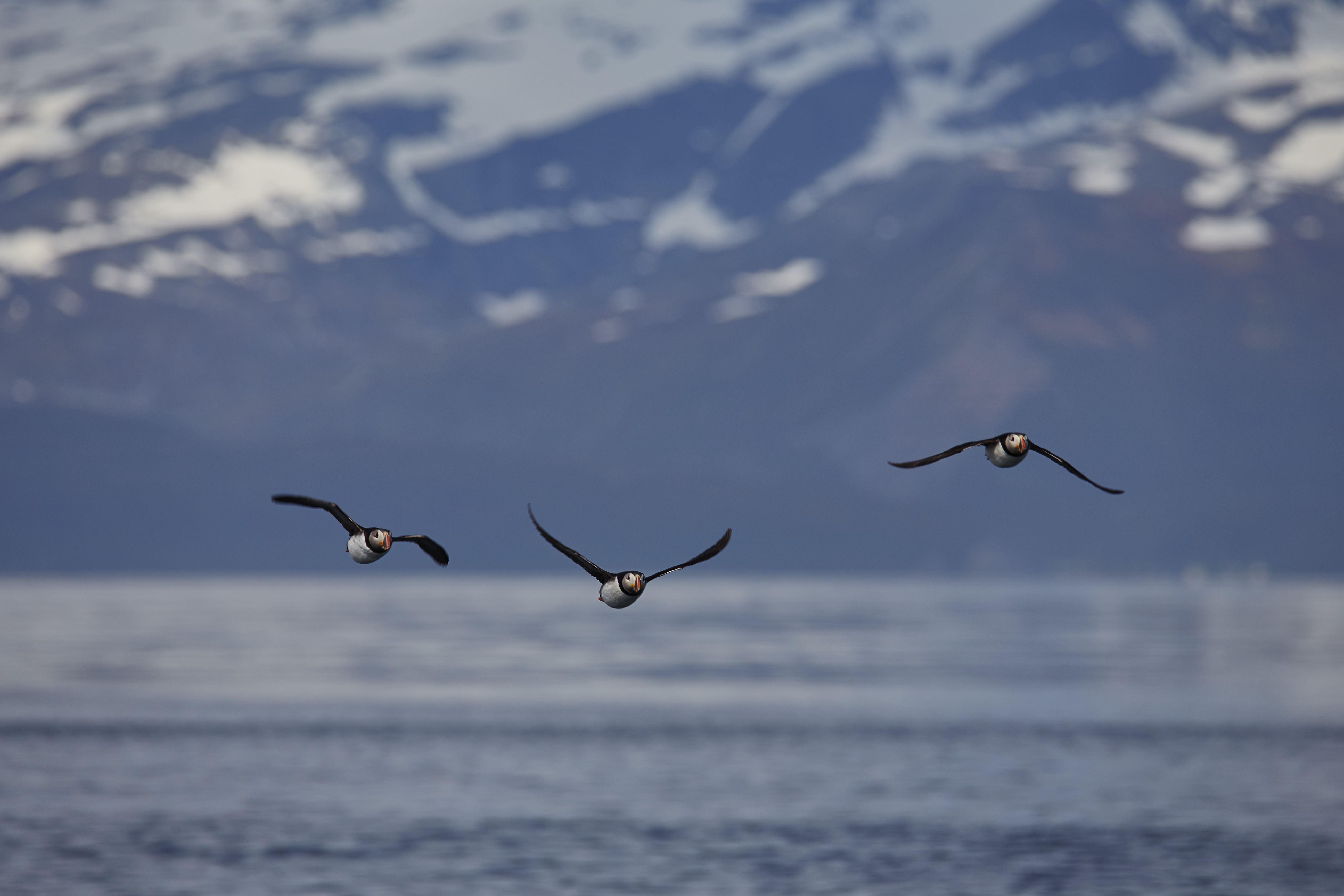 Havørn, fisk, midnattssol tur & overnatting i Lyngen – Green Gold of Norway