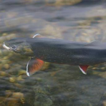 Fjäll & fiske