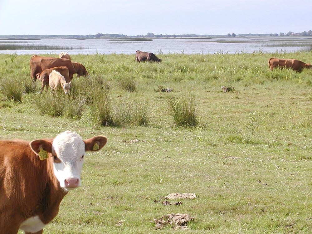 Prat efter mat: Lär om biosfär - Fokus på våtmarkerna längs Helgeån