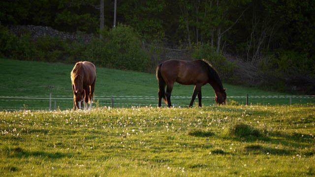 Fiske, ridning, häst & vagn