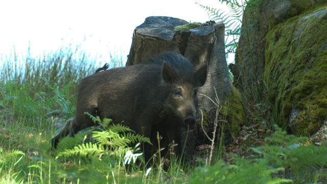 Hunting at Eriksberg