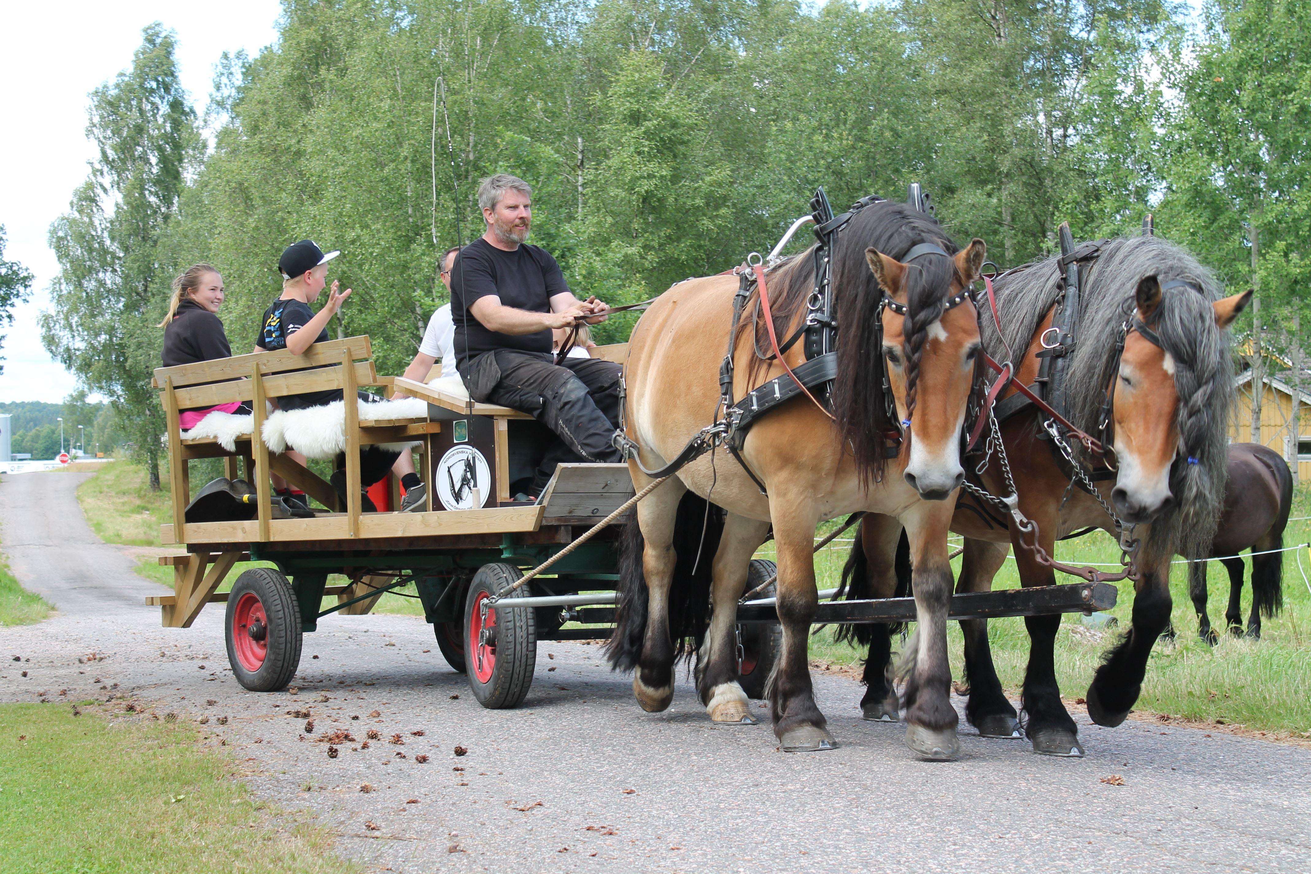 Karin Torstensson , Rundfahrt mit der Pferdekutsche in Fållinge.