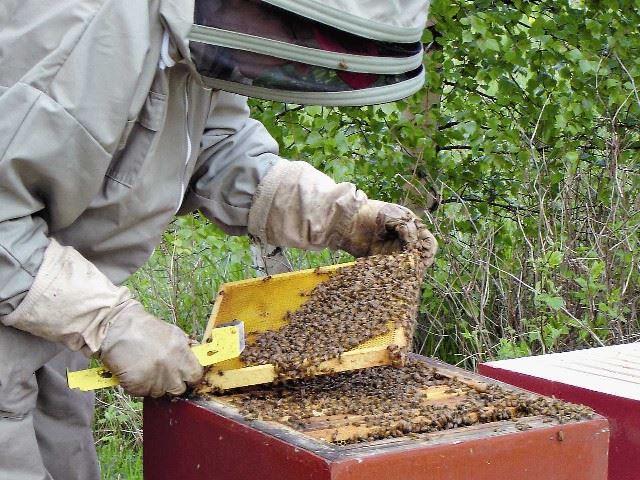 Trogsta honey