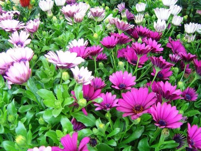 Gnarps Blommor