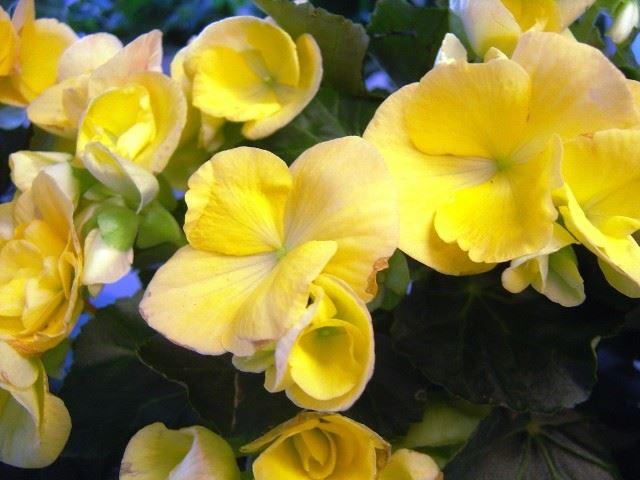 Gnarps blommor, Gnarp
