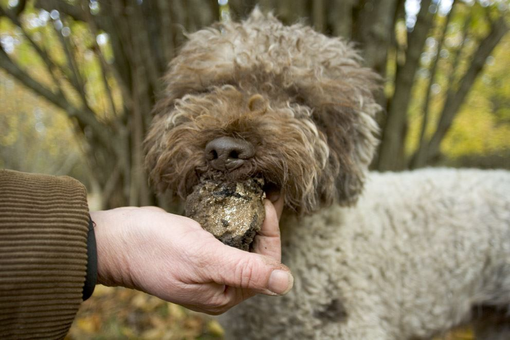 Exciting Truffle Hunt