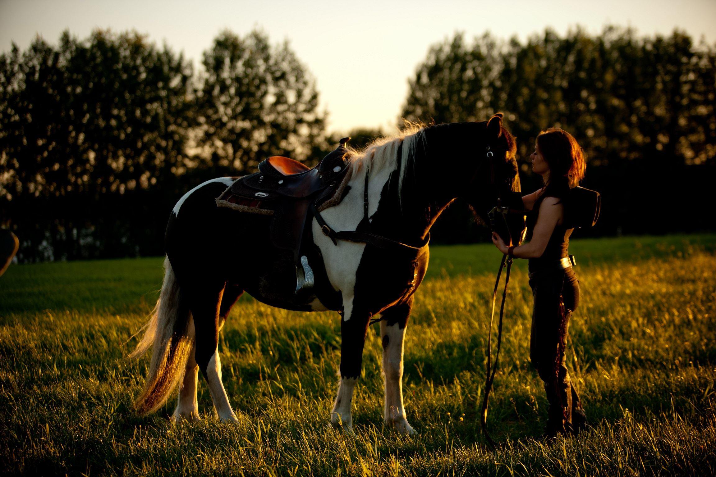 www.ricke.se ,  © Malå kommun, Hästridning