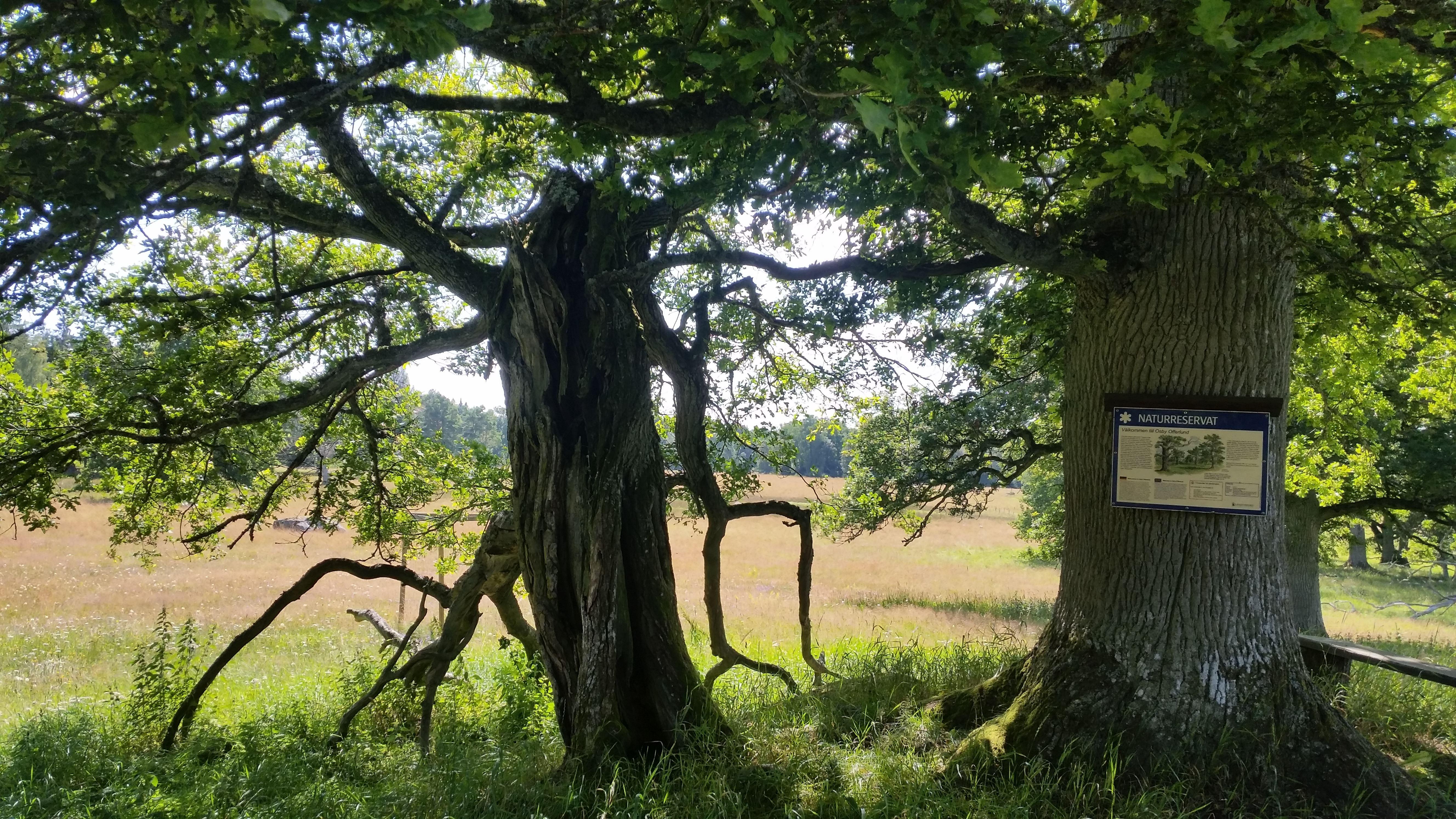 Naturreservat Osby offerlund