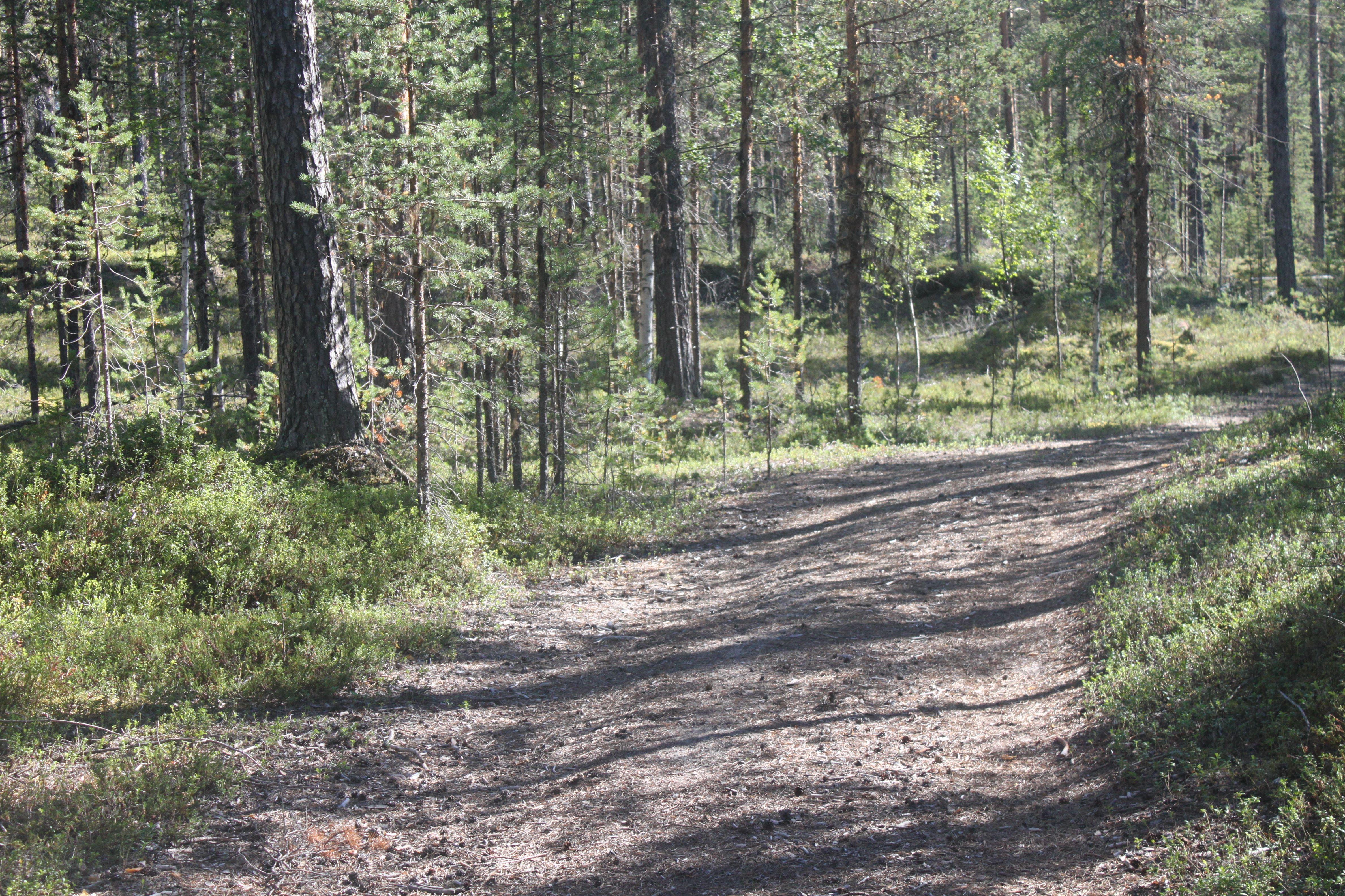© Malå kommun, Kvarnbäcken Sandfors skogsvägen