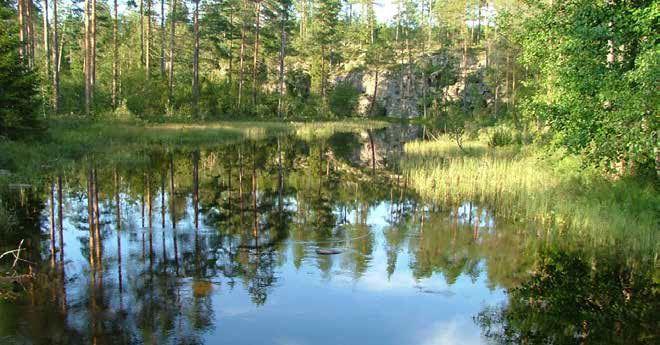 Vacker älv i Stora Bör FVO i Årjäng Värmland
