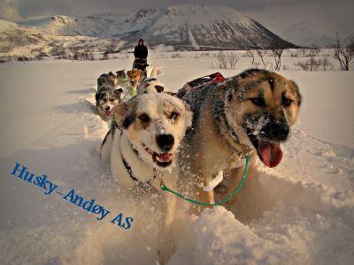 Husky-Andøy