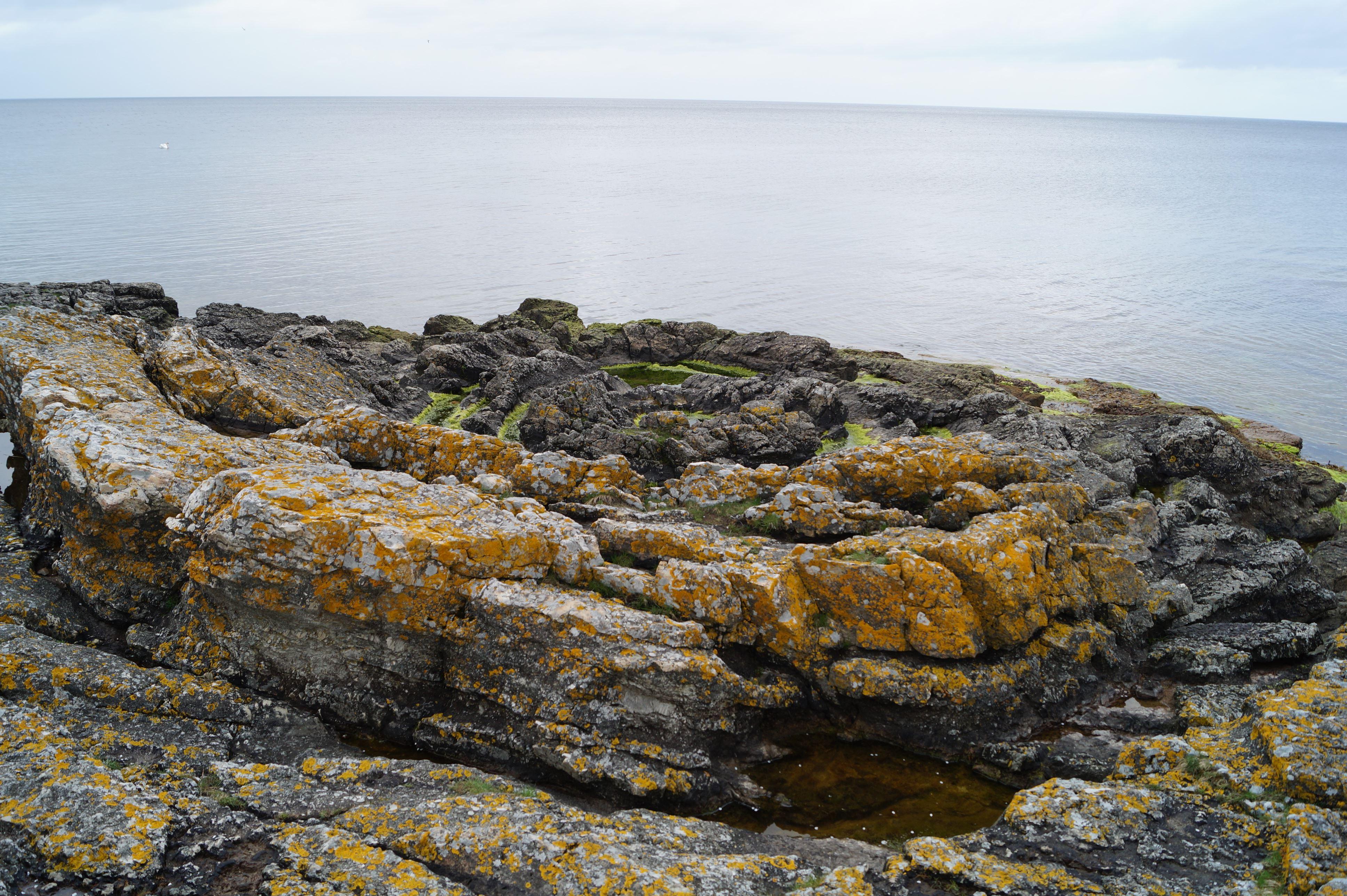 Vilda Oktober - Geologi på Österlen