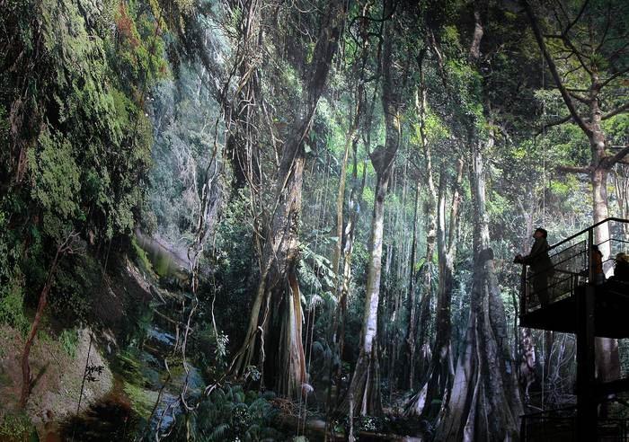 Panorama XXL - AMAZONIA