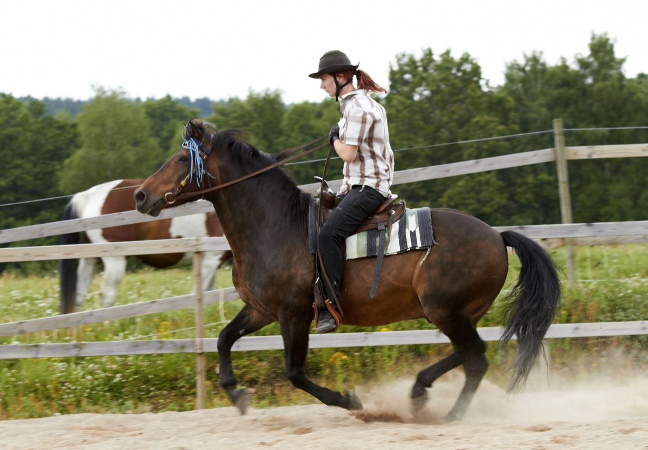 Ljungby Hoppet Ponny