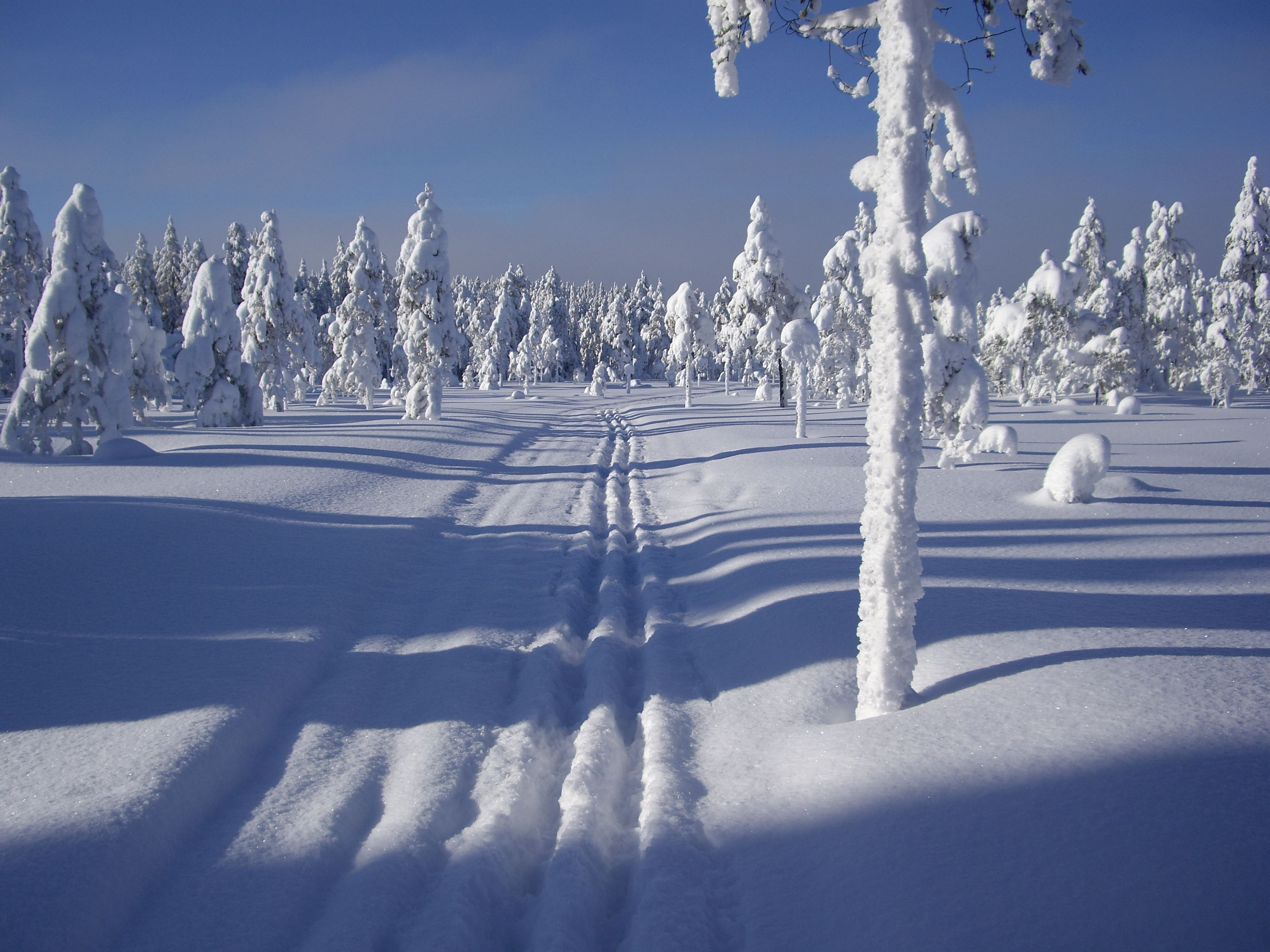 Skispur