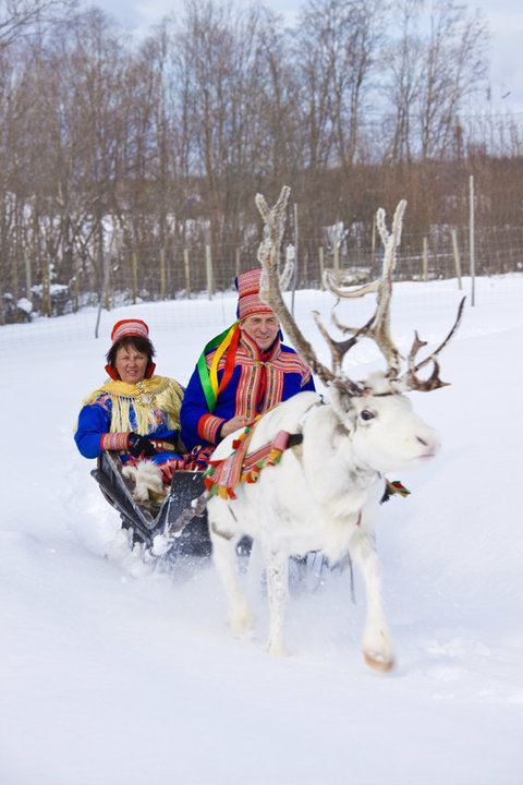 Reindeer sledding and Sami experiences