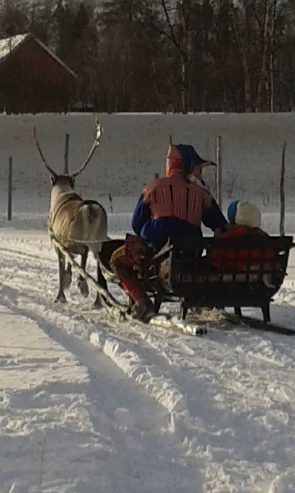 Reindeer Sledding, Sami culture and northern lights hunt – 2,5 hours evening tour