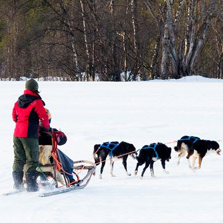 Dogsledding along the Alta river