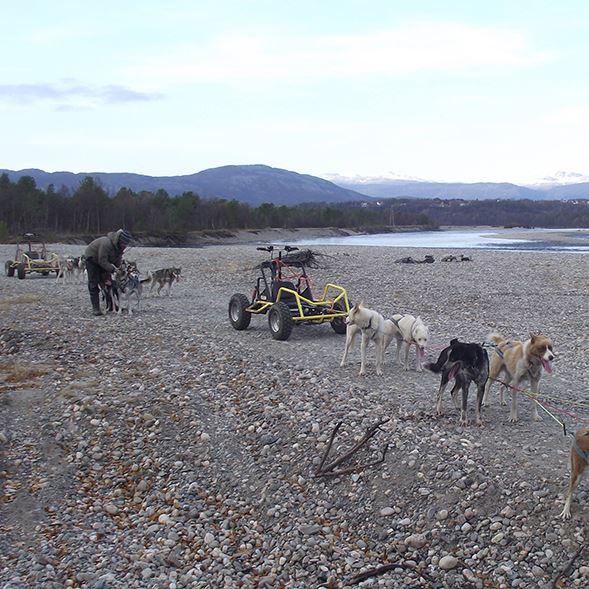 Hundetur med vogn langs Altaelva
