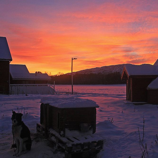 Holmen Husky Northern Night Package - Dogsledding with overnight stay