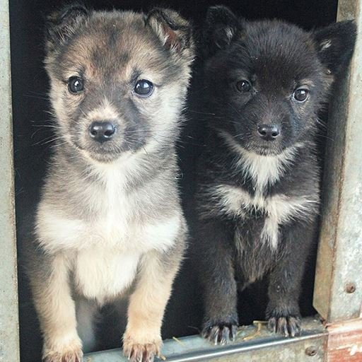 Visit the Puppies!
