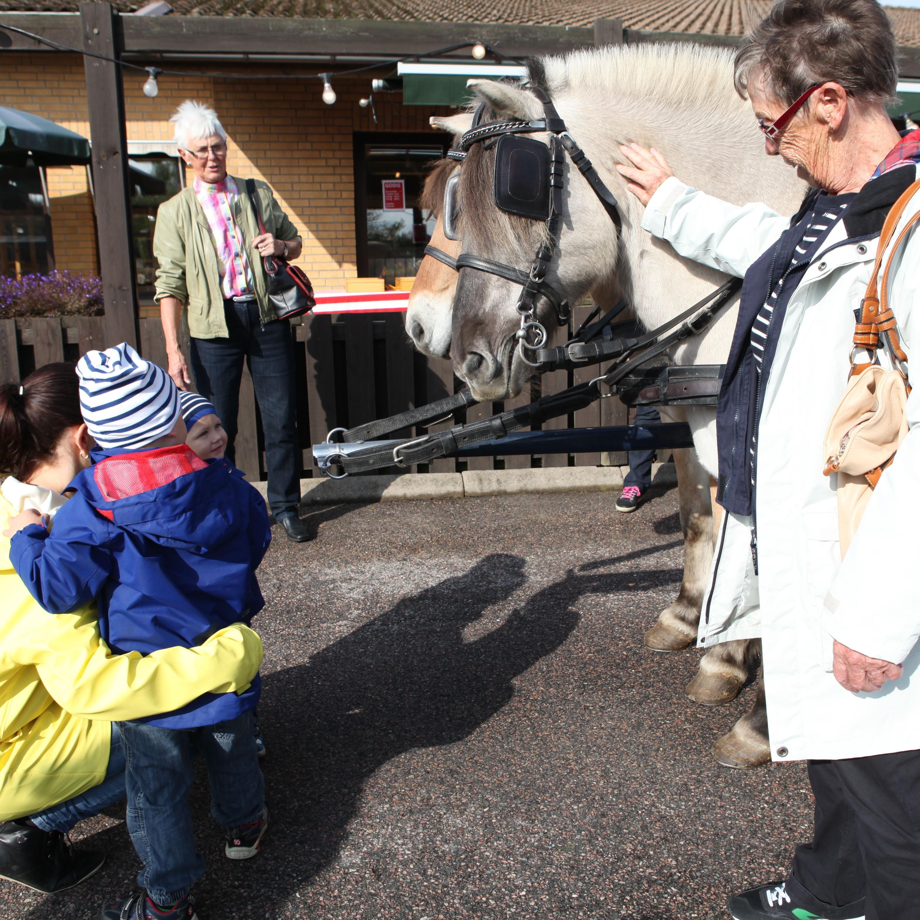 © Kävlinge kommun, Häst och vagn på Gammaldags marknad 2014