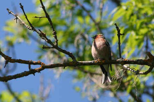 www.fotoakuten.se,  © www.fotoakuten.se, Extremdura - fåglarnas och blommornas paradis