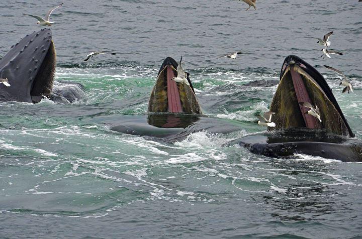 Historic Whale Watching, Tromsø – Arctic Explorers