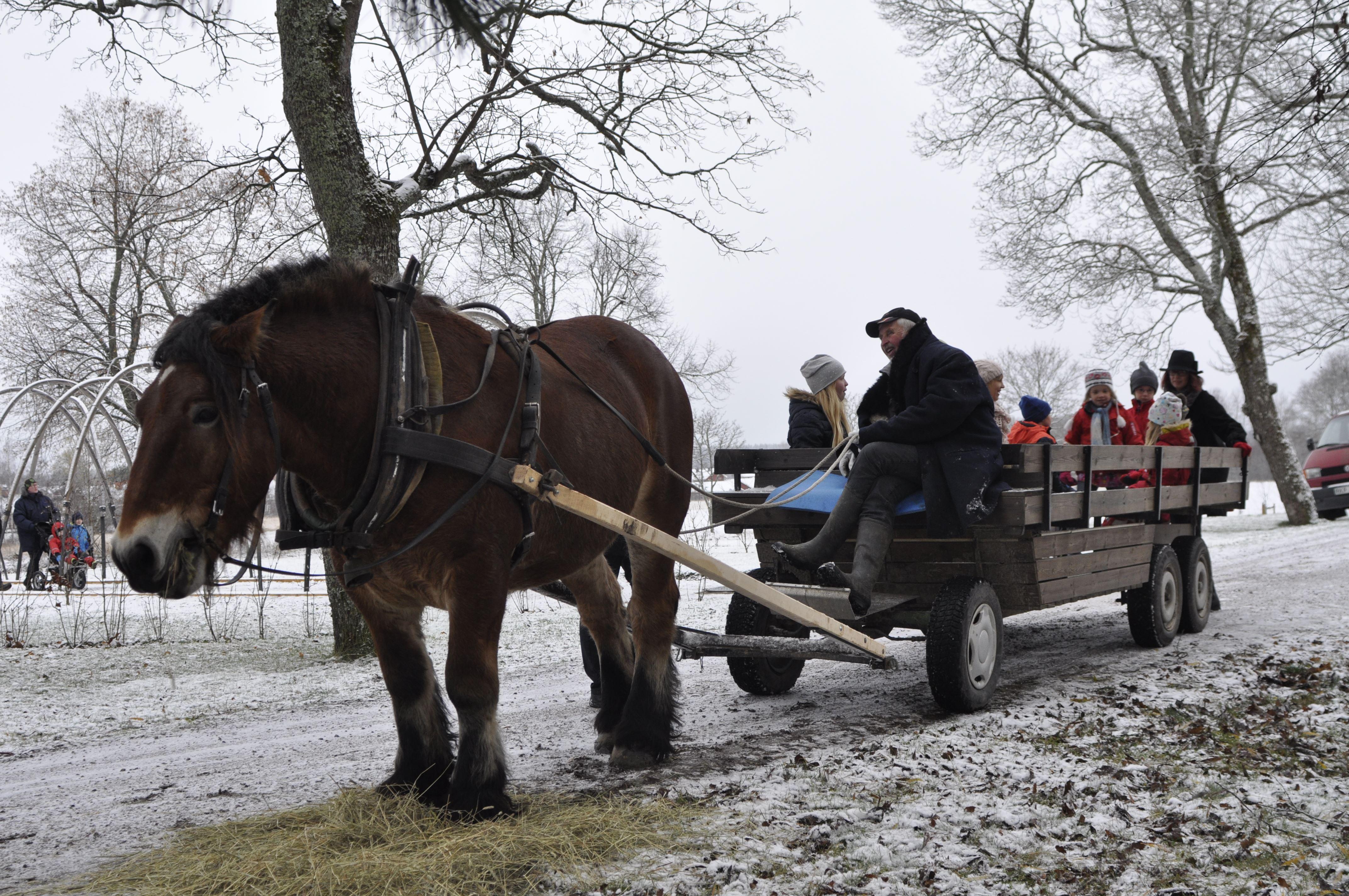 Elin Starck, Hästtur på julmarknad