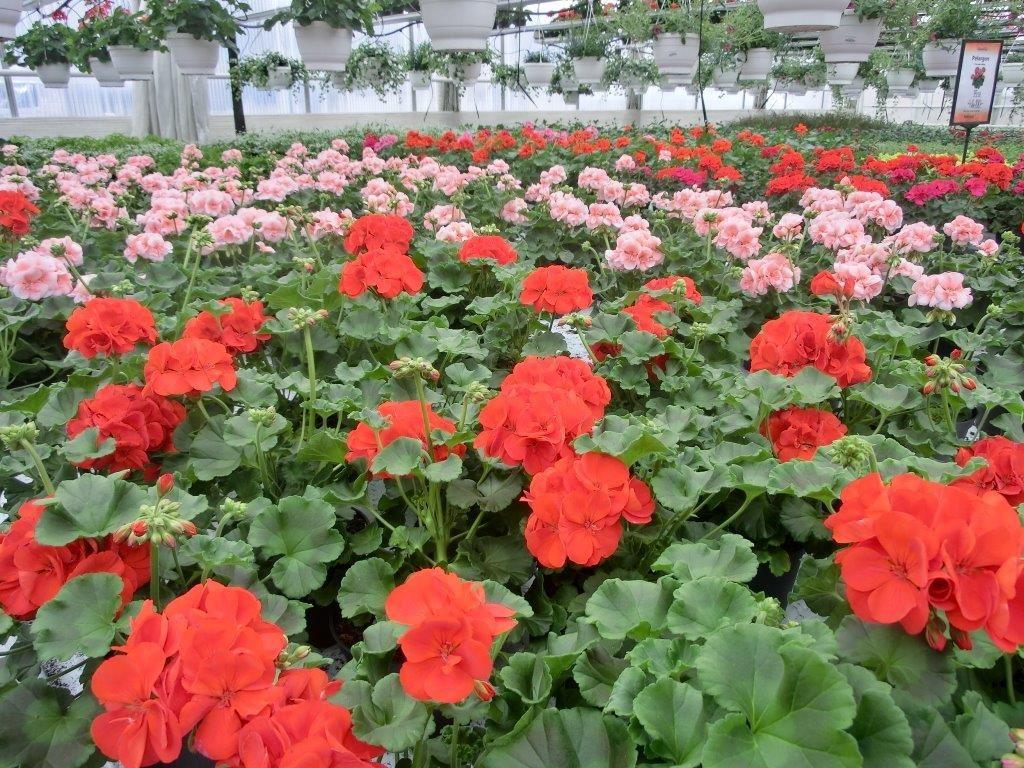 Skinnarnás Blommor och Trädgård