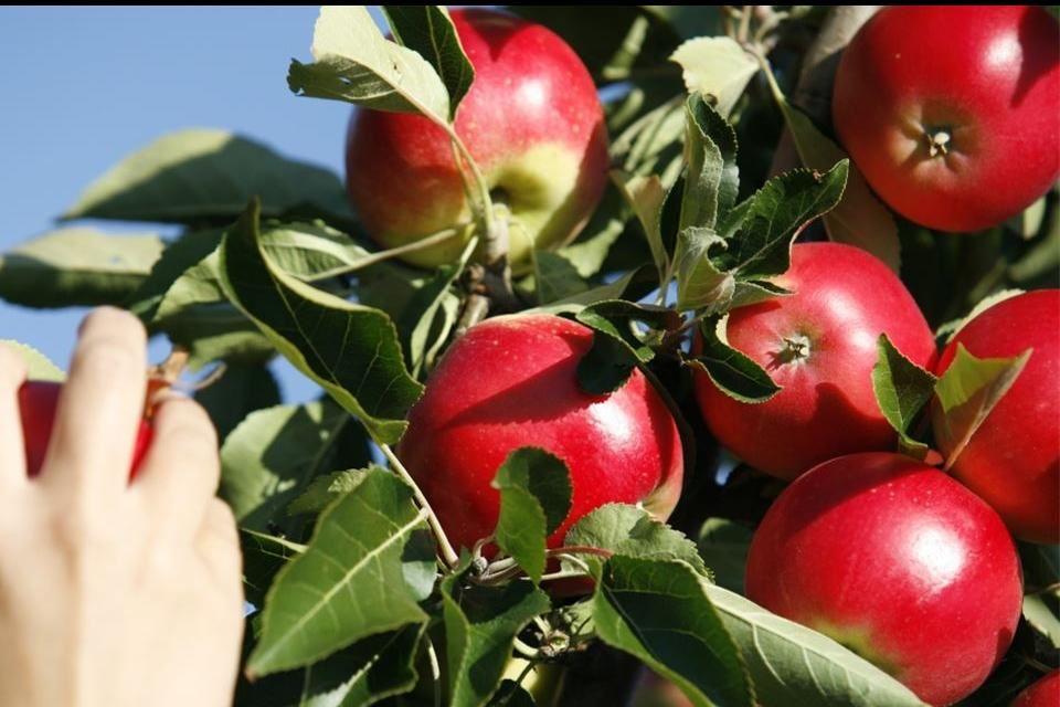 Smålandsbilder.se,  © Värnamo Näringsliv AB, Äpplets dag på naturum, Store Mosse