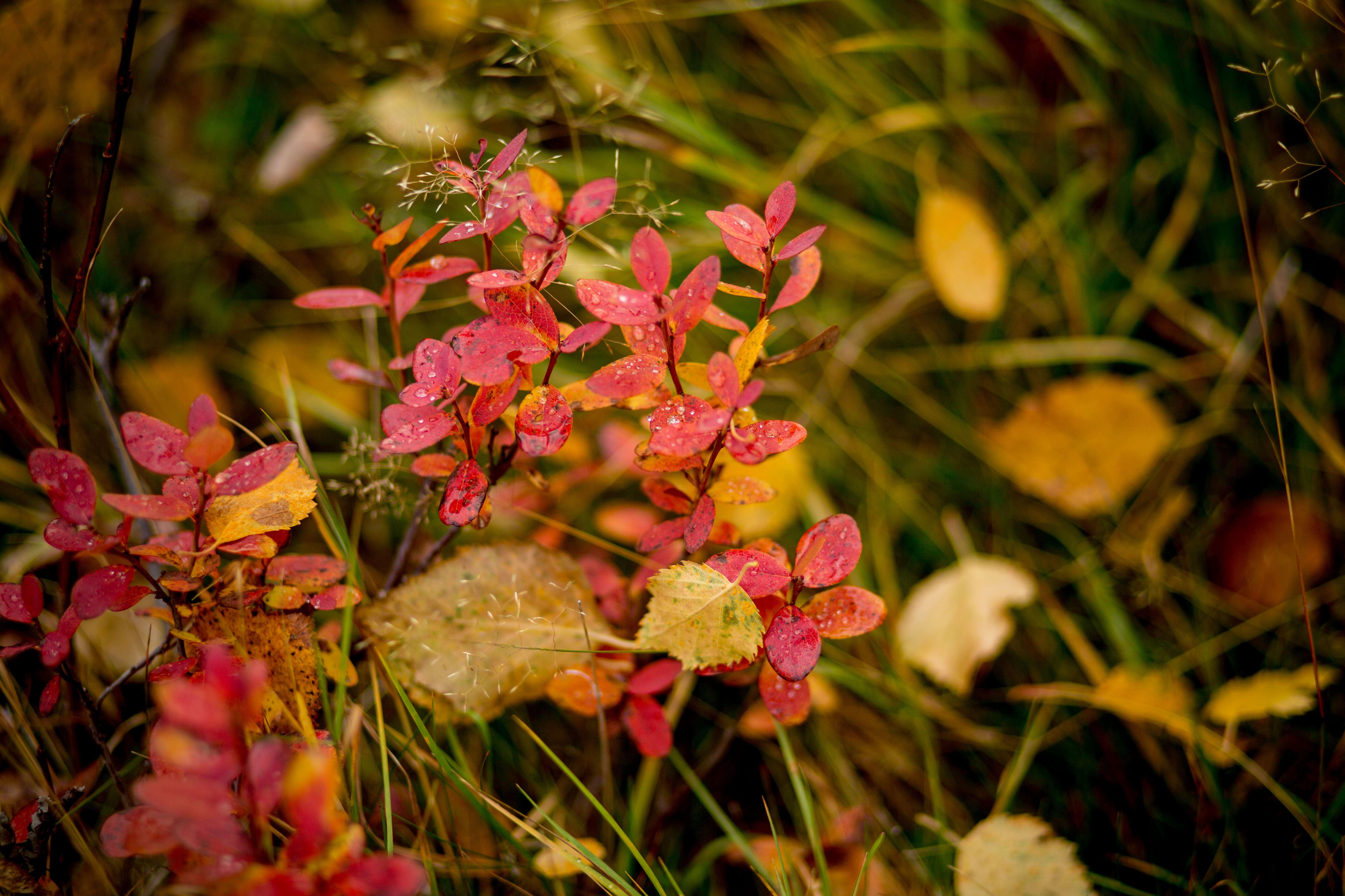 www.ricke.se,  © Malå kommun, Fårträsk vandringsled