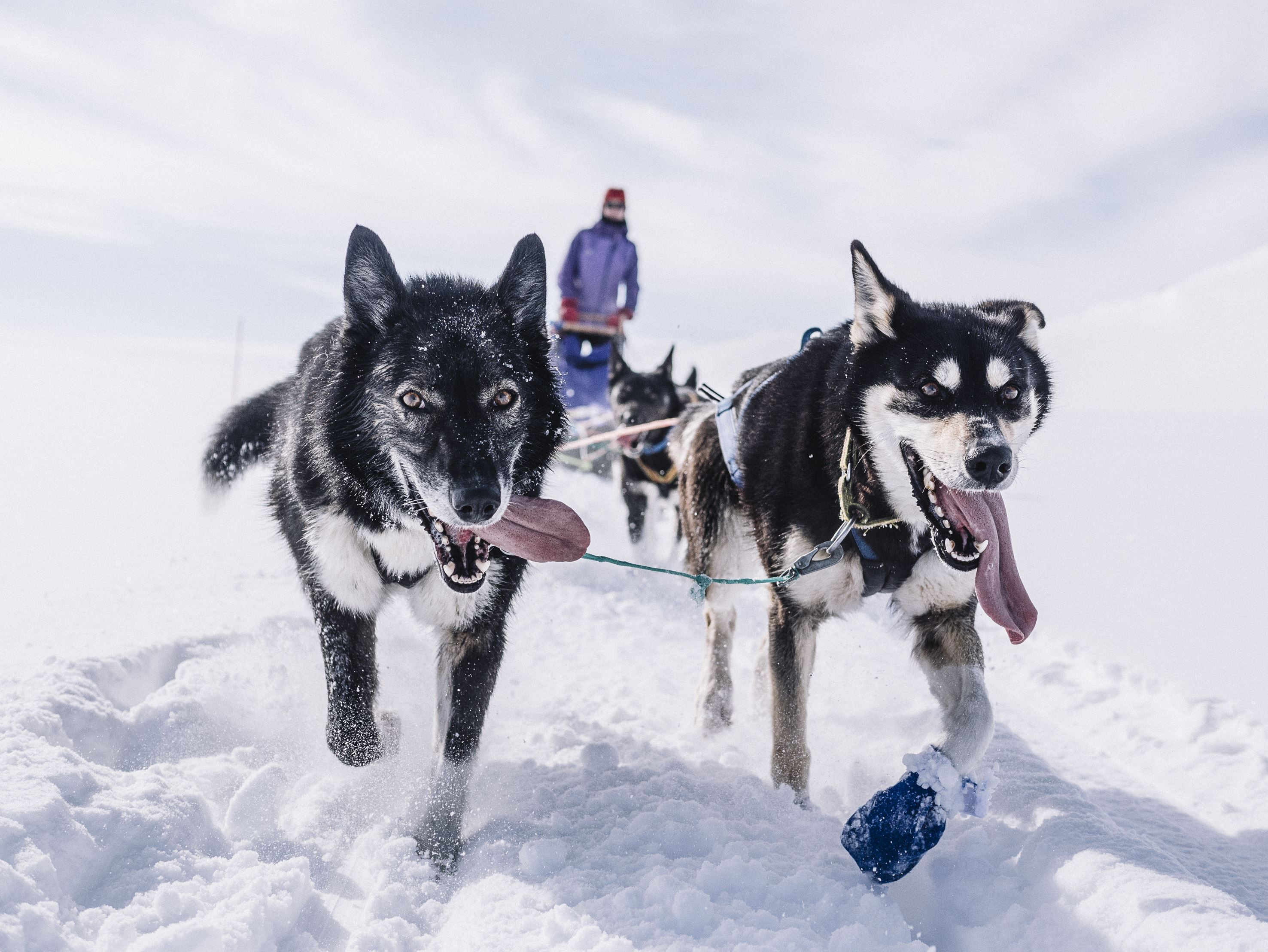 A taste of dog sledding / Trasti og Trine