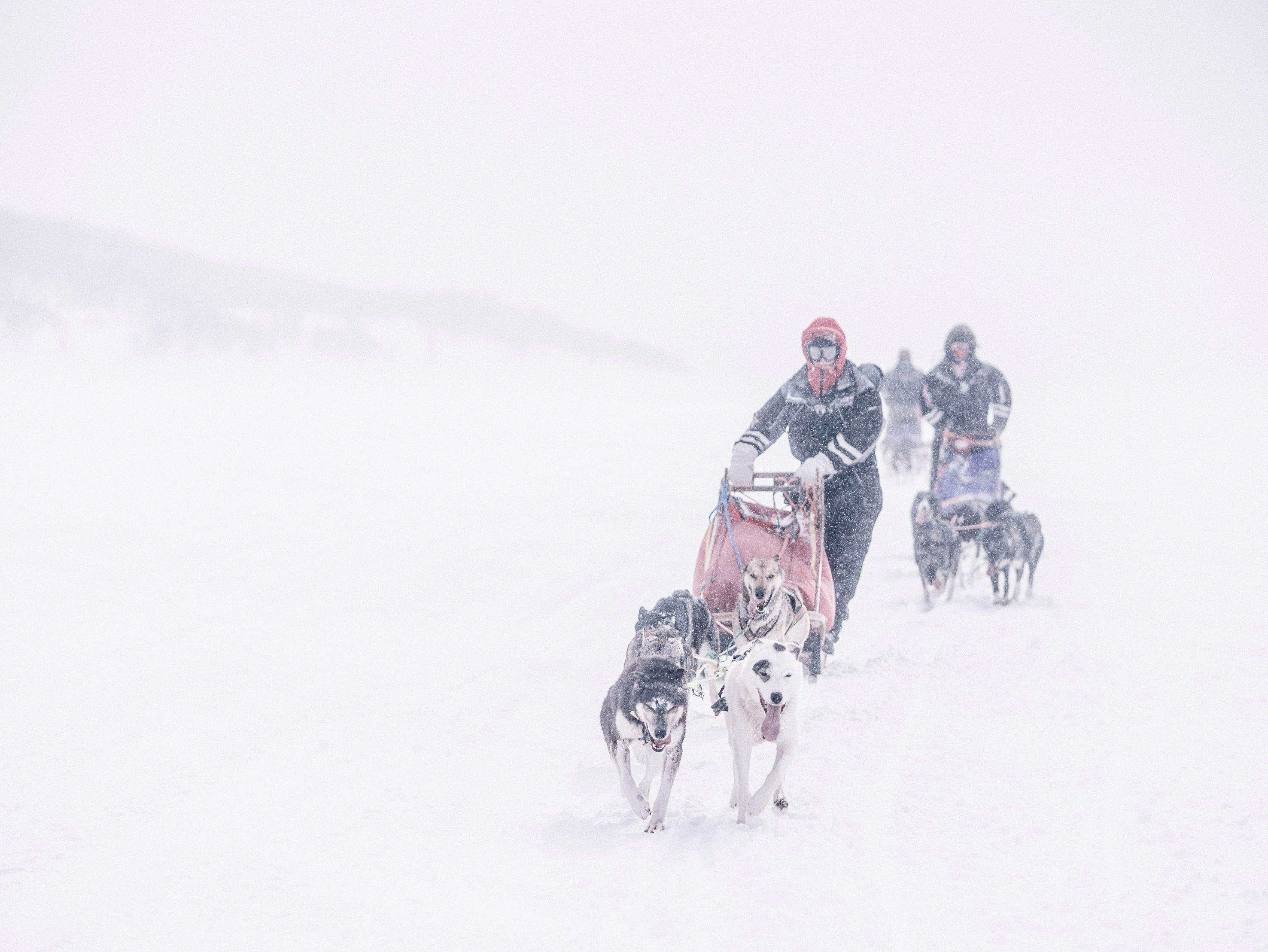 3 dagers januartur på Finnmarksvidda / Trasti & Trine