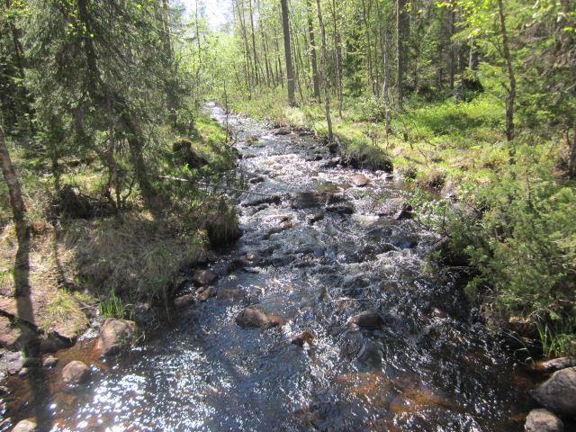 Kerstin Andersson,  © Malå kommun, Koppsele vandringsled
