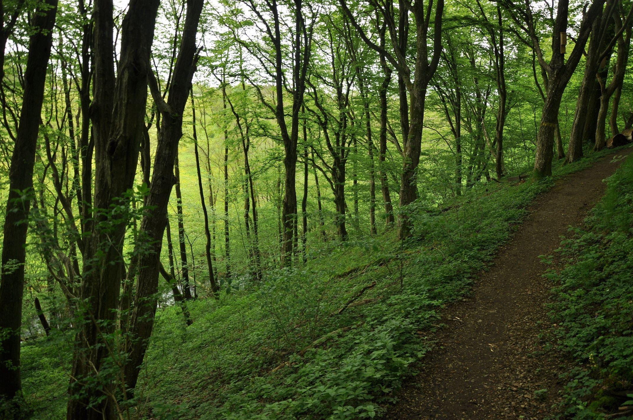 Kronoskogen – tätortsnära friluftsområde