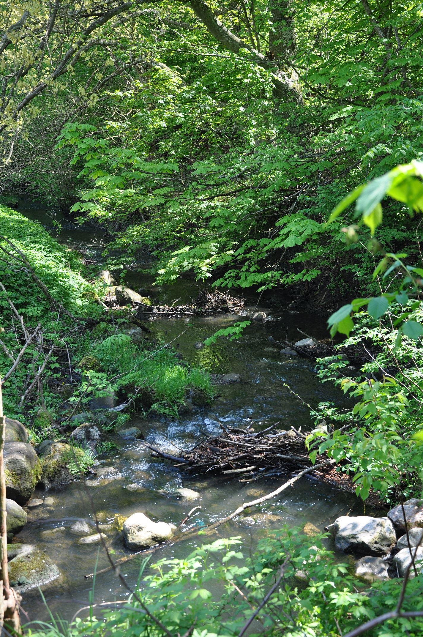 Skogsbacken med laxtrappa