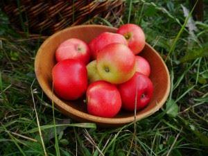 Grannas Äppel