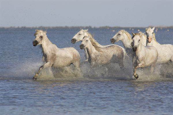 Pure Camargue Experience