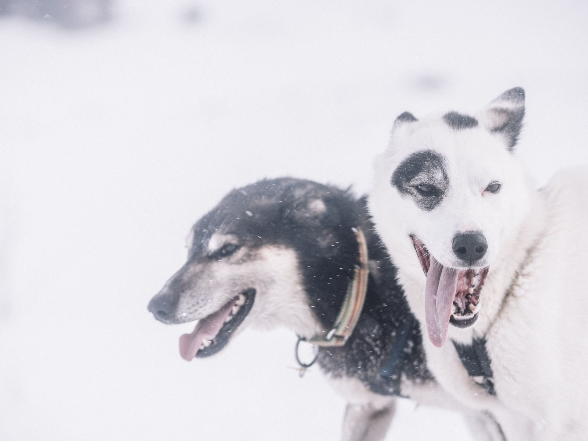 Trasti & Trine 3 days dog-sledding on the Finnmarksvidda Mountain Plateau